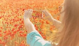Female taking a photo of poppies field with smartphone. Young woman taking a photo with smartphone of red poppies flower meadow in summer outdoor stock photos