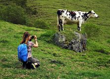 Young woman taking photos in Cocora valley, Cordiliera Central, Salento, Colombia. The Cocora valley - Valle de Cocora in spanish - is a valley in the department stock photo
