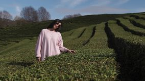 A young woman is among the tea plantations, she touches foliage. A young woman in sun glasses is on the nature, the lady is standing near long fields with tea stock video footage