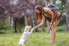 Free Young Woman Teaching A Dog Basic Commands Stock Images - 137727684
