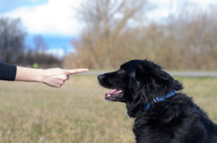 Young woman teaching her black dog obedience. Gesturing with her finger for it to sit or stay, close up of her hand and the animals head stock image
