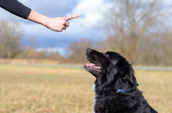 Young woman teaching her black dog obedience. Gesturing with her finger for it to sit or stay, close up of her hand and the animals head royalty free stock images
