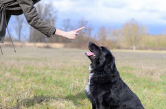 Young woman teaching her black dog obedience. Gesturing with her finger for it to sit or stay, close up of her hand and the animals head stock photos