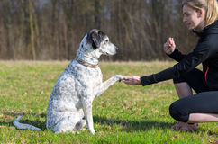 Young woman teaching her dog to present its paw. Kneeling down in a rural field facing the sitting animal with its foot in her hand royalty free stock photography