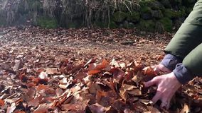 Young woman throws autumn leaves stock video