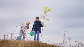 Young woman, together with her daughter, plant a tree. On the hill. Girl with a shovel digging a hole for a tree. A cloudy autumn day stock footage