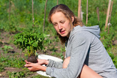 Young Woman with Tomato Seedlings in hands Royalty Free Stock Image