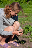 Young Woman with Tomato Seedlings in hands Royalty Free Stock Photo