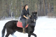 Young woman on top a bay horse in winter forest. Telephoto Royalty Free Stock Photography