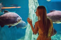 Young woman touches a stingray fish in an oceanarium tunnel.  royalty free stock photos