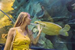 Young woman touches a stingray fish in an oceanarium tunnel.  stock photo