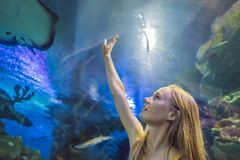 Young woman touches a stingray fish in an oceanarium tunnel.  royalty free stock photo