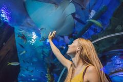 Young woman touches a stingray fish in an oceanarium tunnel.  stock photography