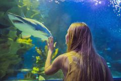 Young woman touches a stingray fish in an oceanarium tunnel.  stock images