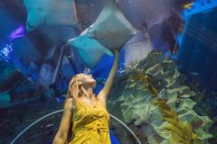 Young woman touches a stingray fish in an oceanarium tunnel.  stock photos