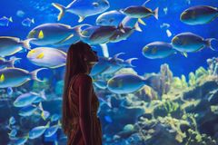 Young woman touches a stingray fish in an oceanarium tunnel.  royalty free stock image