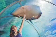 A young woman touches a stingray fish in an oceanarium tunnel Stock Image