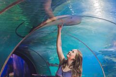 A young woman touches a stingray fish in an oceanarium tunnel Royalty Free Stock Photos