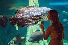 Young woman touches a stingray fish in an oceanarium tunnel.  stock image