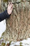 A young woman touching an old oak in the winter to make a wish stock photo