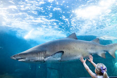 Young woman touching a shark tank Royalty Free Stock Photo