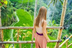 Young woman tourist in the background of rice terraces, Ubud, Bali, Indonesia stock images