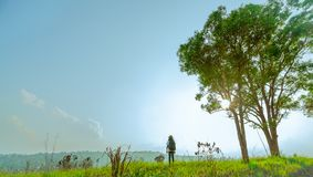 Young woman tourist with hat and backpack stand on the hill with green grass field and couple big tree on sunshine day royalty free stock image