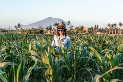 Young woman tourist traveler with straw hat on cornfield on a volcano Agung background at sunset time. Bali island royalty free stock photography