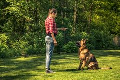 Young woman train german shepherd dog to sit. Toned and authentic image royalty free stock photography