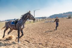Young woman training a horse Stock Image