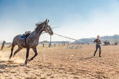 Young woman training a horse Stock Photo