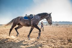 Young woman training a horse Royalty Free Stock Photos