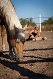 Young woman training horse outside in summer Royalty Free Stock Photo
