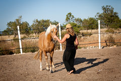 Young woman training horse outside in summer Stock Photos