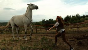 A young woman trains a horse. The horse rears.