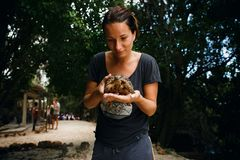 Young woman traveler holding small turtle hands. Young woman traveler holding small turtle in hands stock photography