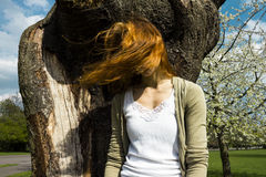 Young woman in tree with windblown hair. Young woman sitting in tree with her windblown hair covering her face Stock Photography