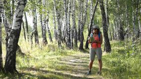 Young woman trekking in a birch wood stock footage