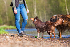 Young woman with two dogs at the river royalty free stock images
