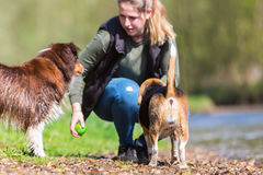 Young woman with two dogs at a river Royalty Free Stock Photography