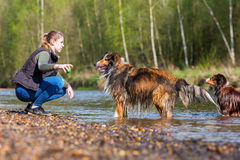 Young woman with two dogs at the river. Young woman playing with two dogs at the river Royalty Free Stock Images