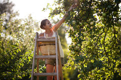Young woman up on a ladder Royalty Free Stock Images