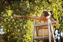 Young woman up on a ladder Royalty Free Stock Photo