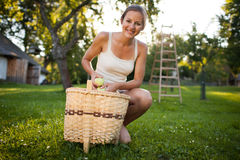 Young woman up on a ladder picking apples from an apple tree Stock Image
