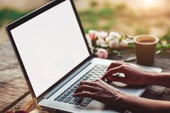 Young woman using and typing laptop computer at rough wooden table with coffee cup, strawberries, bouquet of peonies flowers stock photography