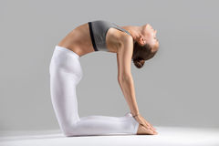 Young woman in Ustrasana pose, grey studio background Royalty Free Stock Images