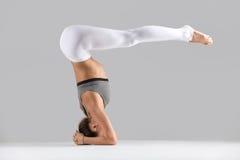 Young woman in variation of salamba sirsasana pose, grey studio Royalty Free Stock Images