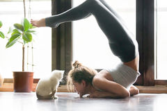 Young woman in variation of vrischikasana pose, home, cat near Royalty Free Stock Photography
