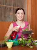 Young woman with various seedlings Stock Image