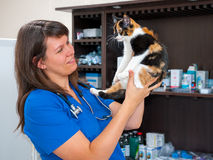 Young woman vet inspects cat Stock Photos